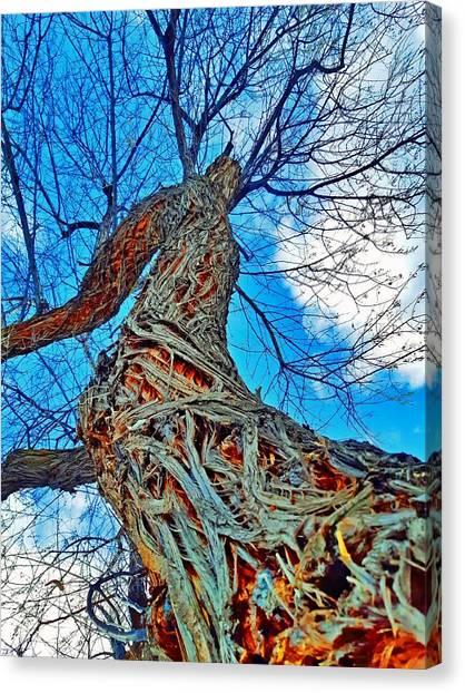 Timeworn Canvas Print - The Queen Of Pine Park by Tara Turner