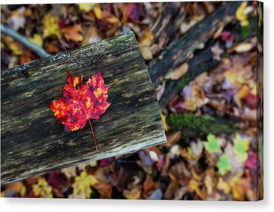 The Reason They Call It Fall Canvas Print