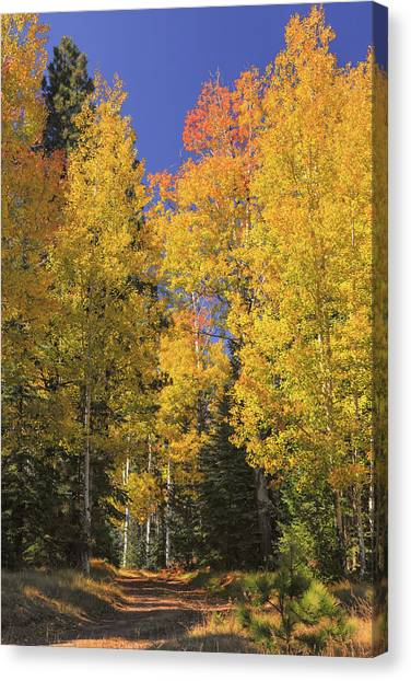 Canvas Print featuring the photograph The Road A Little Less Traveled by Rick Furmanek