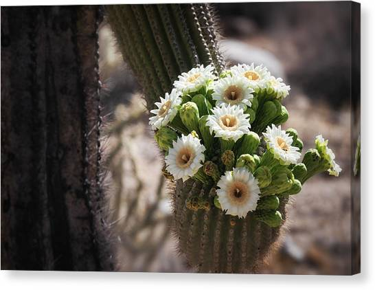 Canvas Print - The Saguaro Bride  by Saija Lehtonen