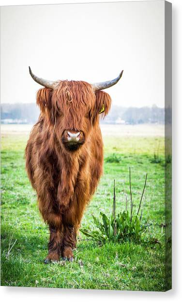 Canvas Print featuring the photograph The Scottish Highlander by Anjo Ten Kate