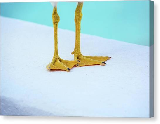 The Seagull's Feet - Minimalism Canvas Print