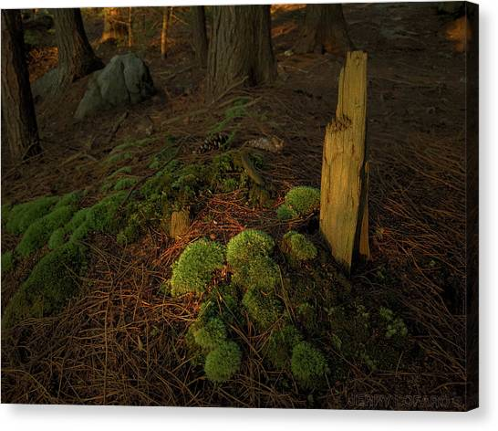 Pine Trees Canvas Print - The Secret by Jerry LoFaro
