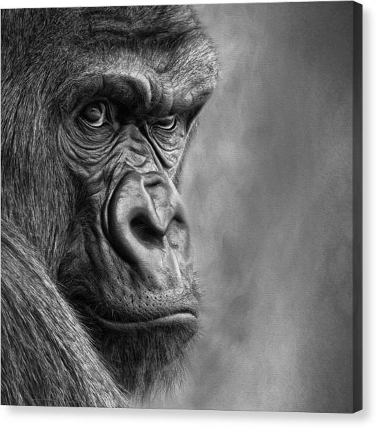 The Serious One Canvas Print