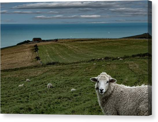 Canvas Print featuring the photograph The Sheep On The Clifftop by Chris Lord