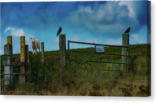 Canvas Print featuring the photograph The Sheep That Hates Dogs by Chris Lord