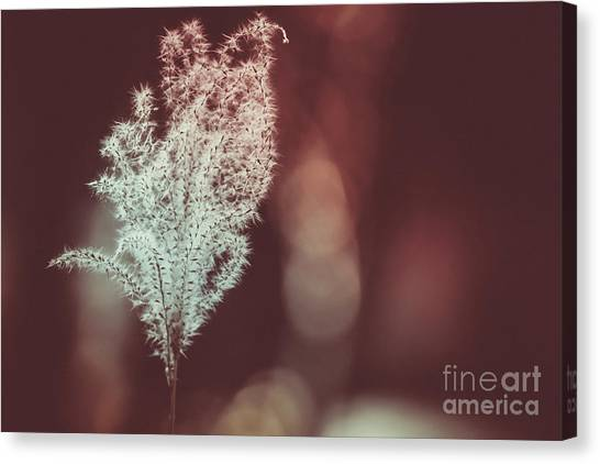 The Shine Canvas Print