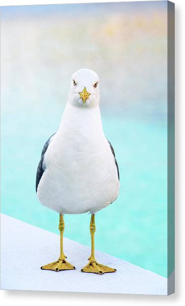The Stare Of The Seagull Canvas Print