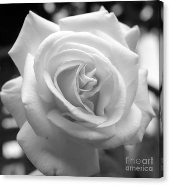 The Subtle Rose Canvas Print