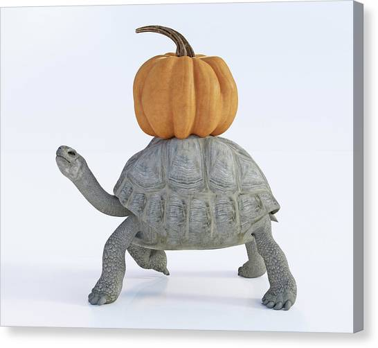 Tortoises Canvas Print - The Tortoise And The Pumpkin by Betsy Knapp
