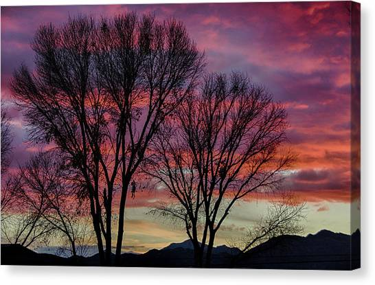 The Trees Know Sunset Canvas Print