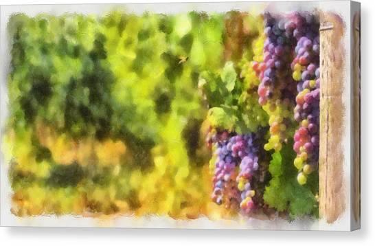 The Vine Canvas Print