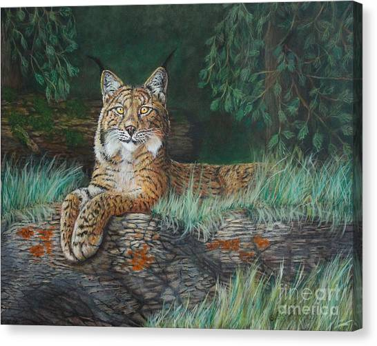 The Wild Cat  Canvas Print