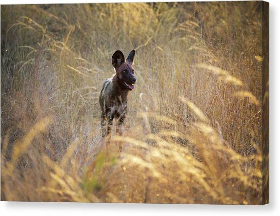 Canvas Print featuring the photograph The Wild Dog Of Africa by John Rodrigues