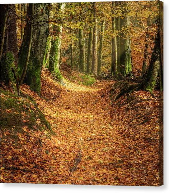 Canvas Print featuring the photograph The Yellow Leaf Road by Elliott Coleman