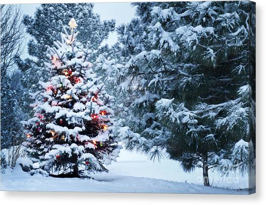Pine Trees Canvas Print - This Snow Covered Christmas Tree Stands by Ricardo Reitmeyer