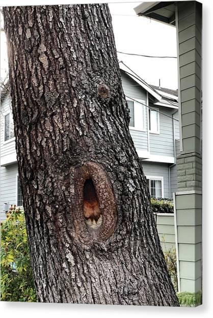 This Tree Sings Oprah Canvas Print