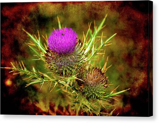 Canvas Print featuring the photograph Thistle Life by Milena Ilieva
