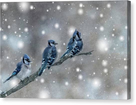 Three Blue Jays In The Snow Canvas Print