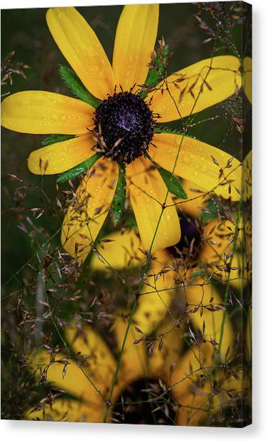 Canvas Print featuring the photograph Through The Meadow Grasses by Dale Kincaid