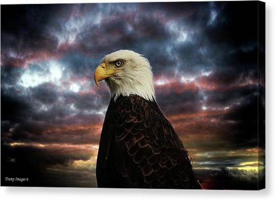 Thunder Eagle Canvas Print