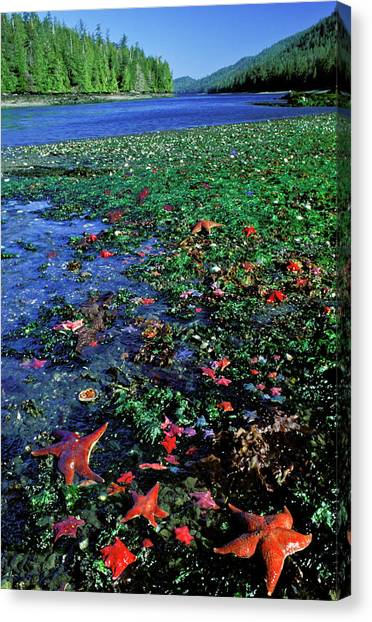 Tideppol Life, Burnaby Narrows, Gwaai Canvas Print by Jerry Kobalenko