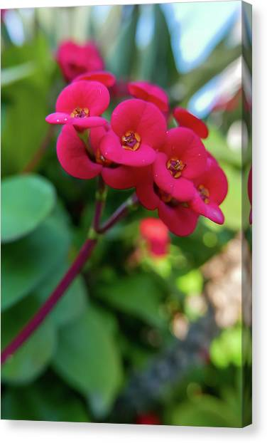 Tiny Red Flowers Canvas Print