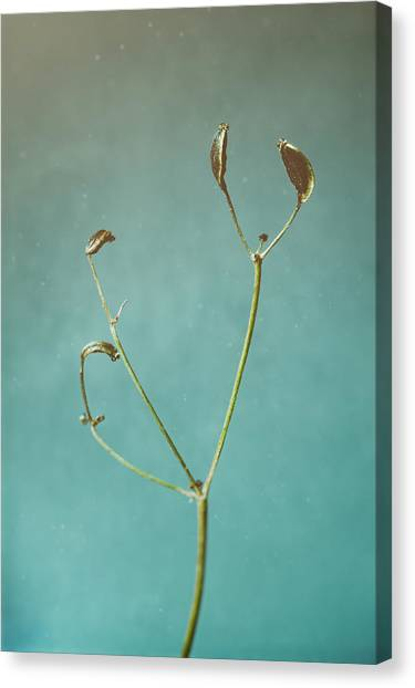 Flash Canvas Print - Tiny Seed Pod by Scott Norris