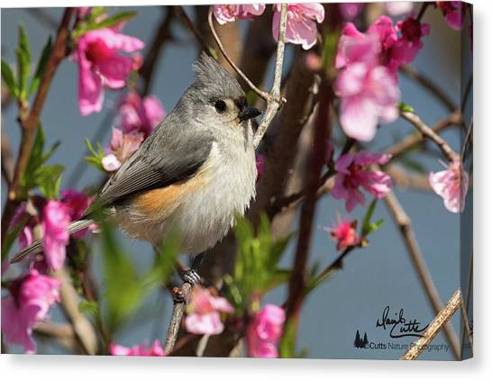 Titmouse And Peach Blossoms Canvas Print