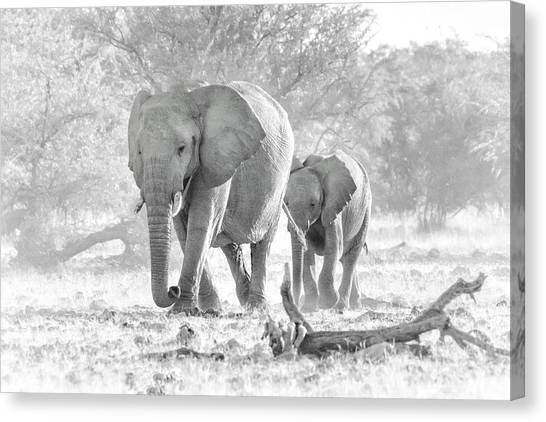 Canvas Print featuring the photograph To The Watering Hole by Rand