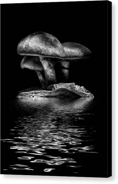 Toadstools On A Toronto Trail Reflection 3 Canvas Print