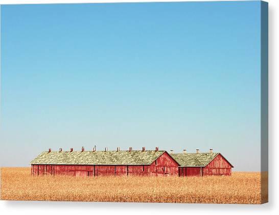 Corn Field Canvas Print - Tobacco Row by Todd Klassy