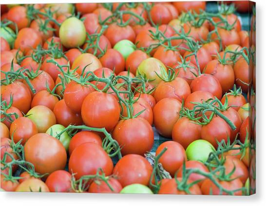 Tomatoes On The Vine Canvas Print by By Ken Ilio