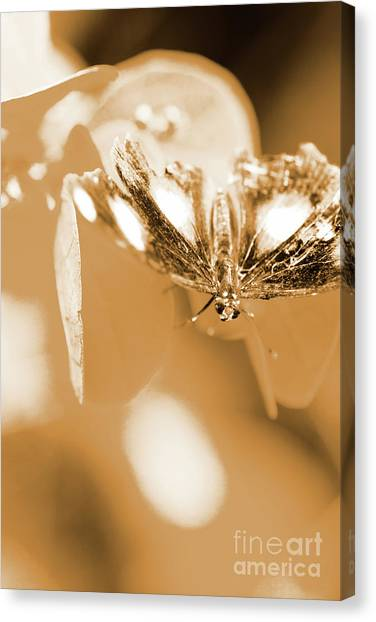 Moth Canvas Print - Toned Tropics by Jorgo Photography - Wall Art Gallery