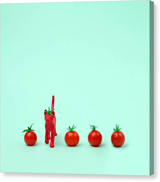 Toy Cat Painted Like A Tomato In Row Canvas Print by Juj Winn