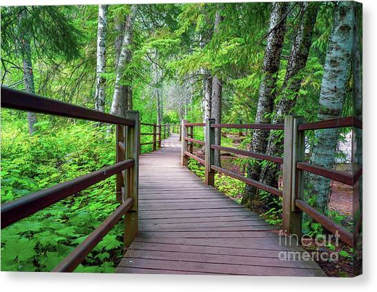 Trail At Gooseberry Falls Canvas Print