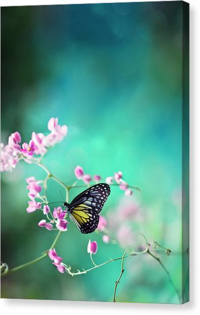 Trails Of Spring Canvas Print by Twomeows