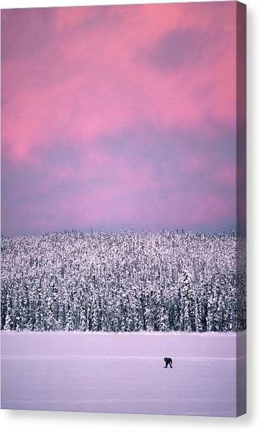 Trapper In Alaska, United States - Canvas Print by Jean-erick Pasquier