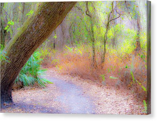 Traveled Paths Canvas Print