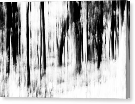 Canvas Print featuring the photograph Tree Abstract In Black And White by Angie Tirado