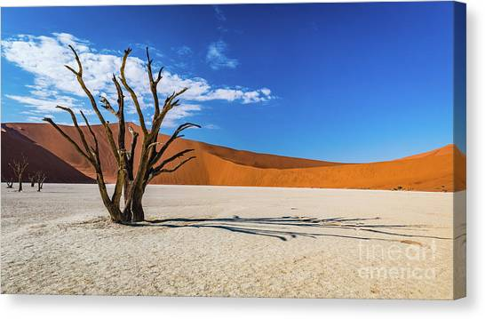 Tree And Shadow In Deadvlei, Namibia Canvas Print