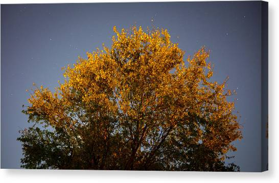 Tree And Stars Wide Canvas Print