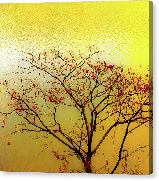 Tree And Water 2 Canvas Print