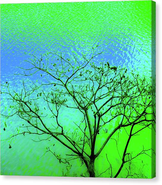 Tree And Water 3 Canvas Print