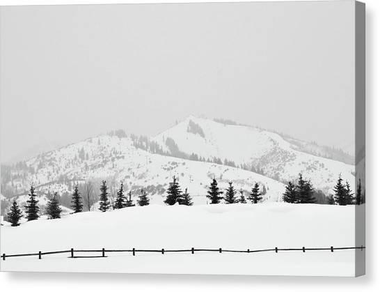 Tree Fence Canvas Print by Dana Klein