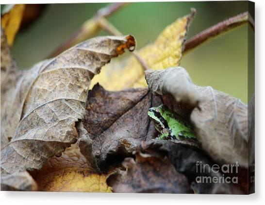 Canvas Print - Tree Frog Seeking Shelter by Nick Gustafson