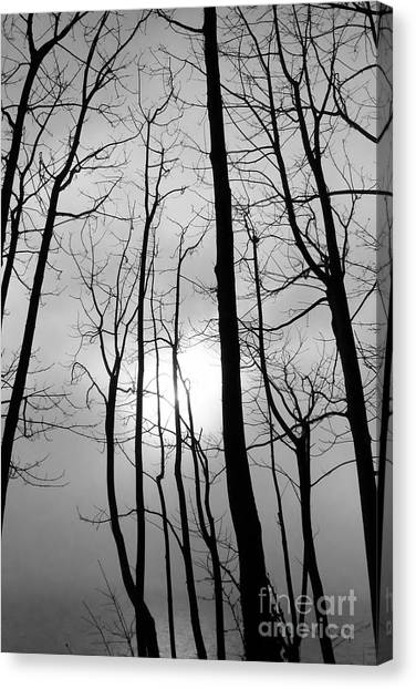 Canvas Print featuring the photograph Tree Series 1 by Jeni Gray