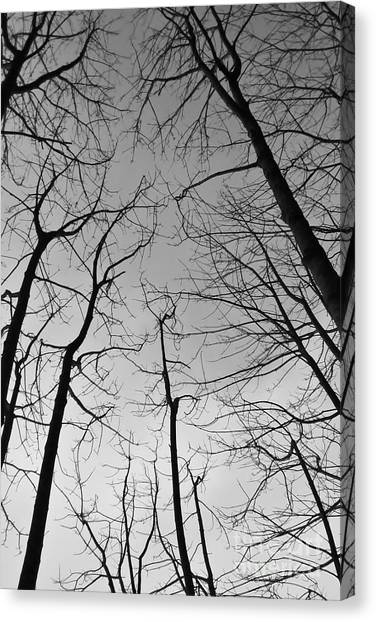 Canvas Print featuring the photograph Tree Series 2 by Jeni Gray
