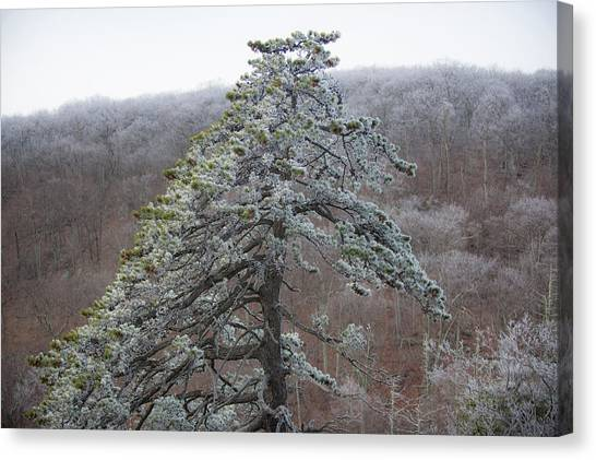 Tree With Hoarfrost Canvas Print