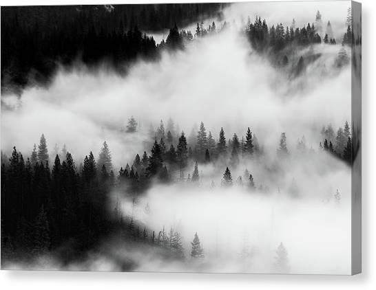 Canvas Print featuring the photograph Trees In The Mist 1 by Stephen Holst